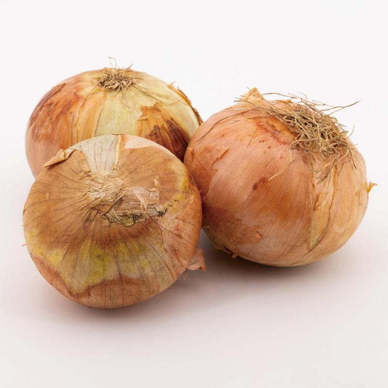 「タマネギ」の育て方・栽培のコツ(家庭菜園)