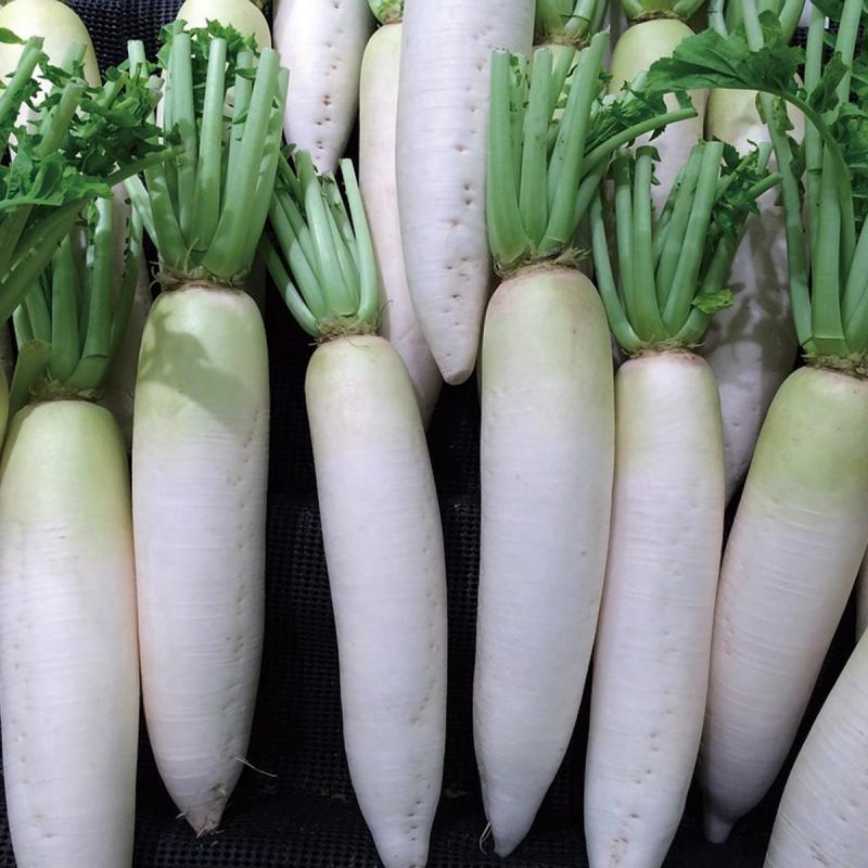 「ダイコン」の育て方・栽培のコツ(家庭菜園)