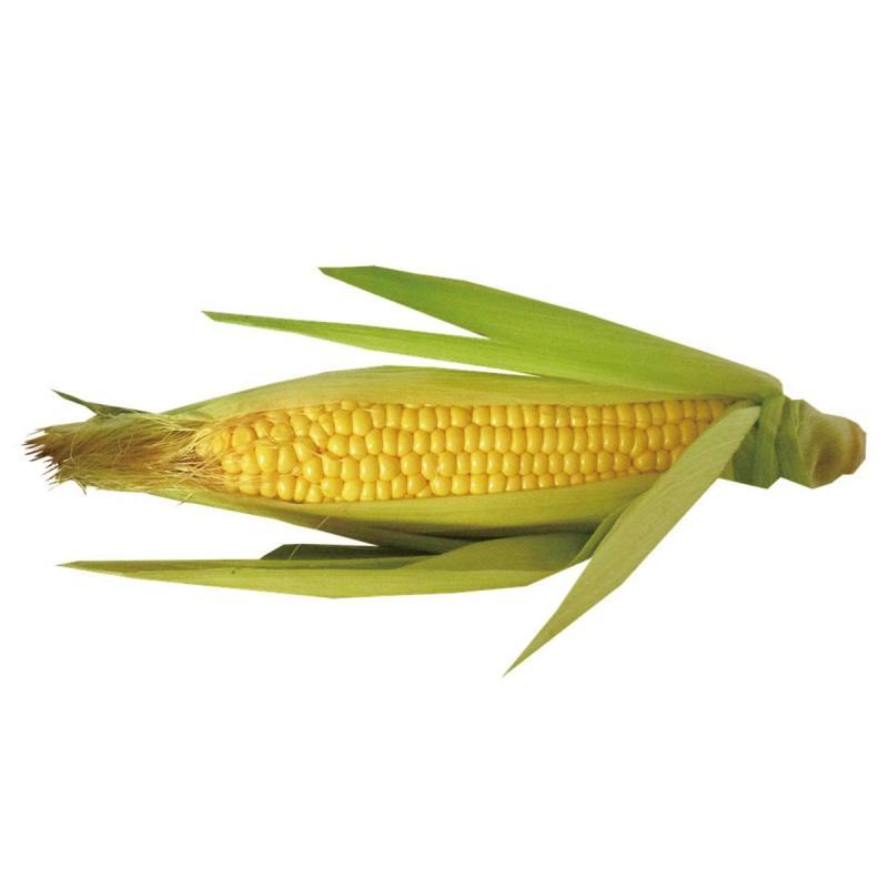 「トウモロコシ」の育て方・栽培のコツ(家庭菜園)