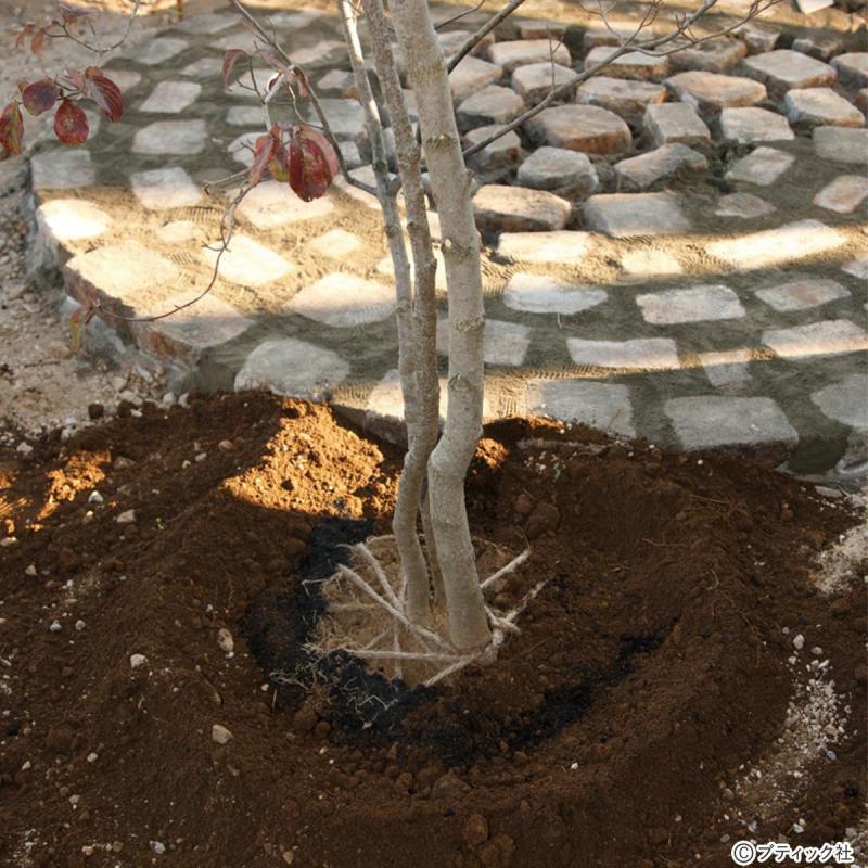 ガーデニング「木を植える」やり方