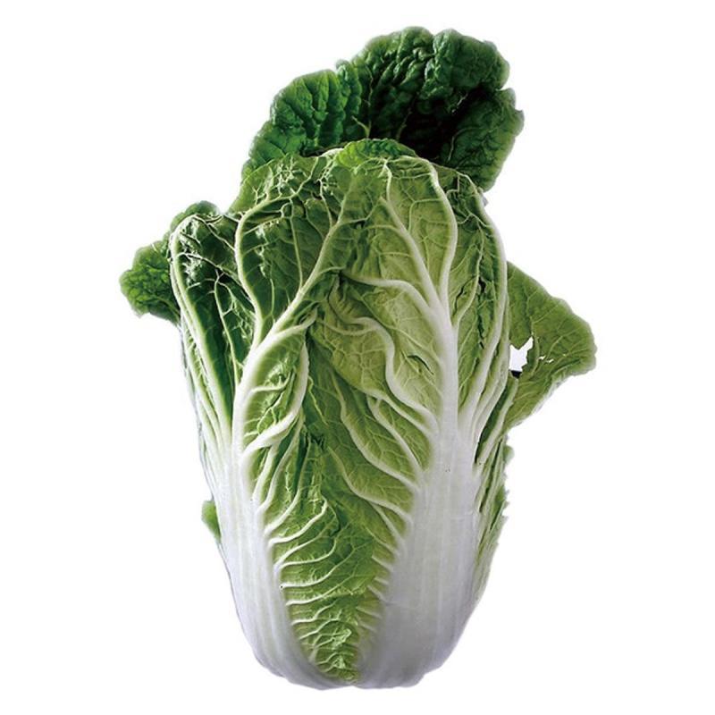 「白菜」の育て方・栽培のコツ(家庭菜園)