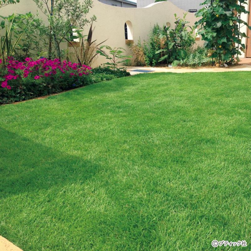 天然芝の庭vs人工芝の庭 徹底比較!