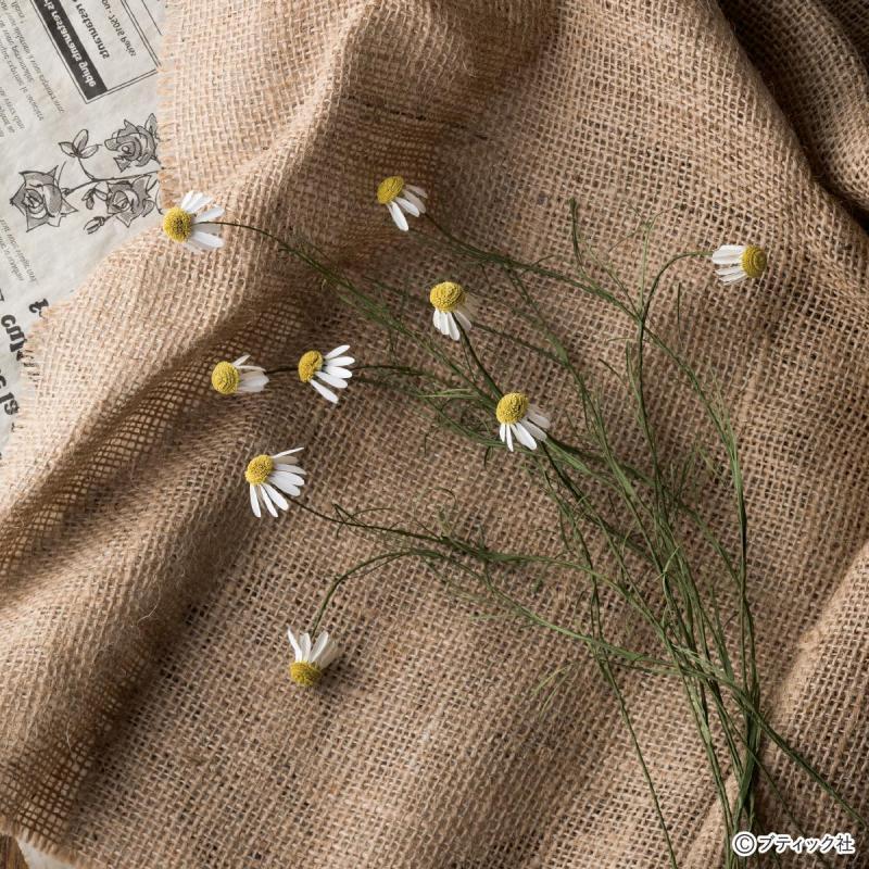 本物みたい!紙でつくるお花「カモミール」の作り方