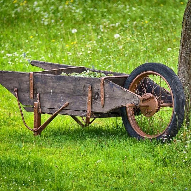 庭づくりのコツ「庭木の手入れ」やり方