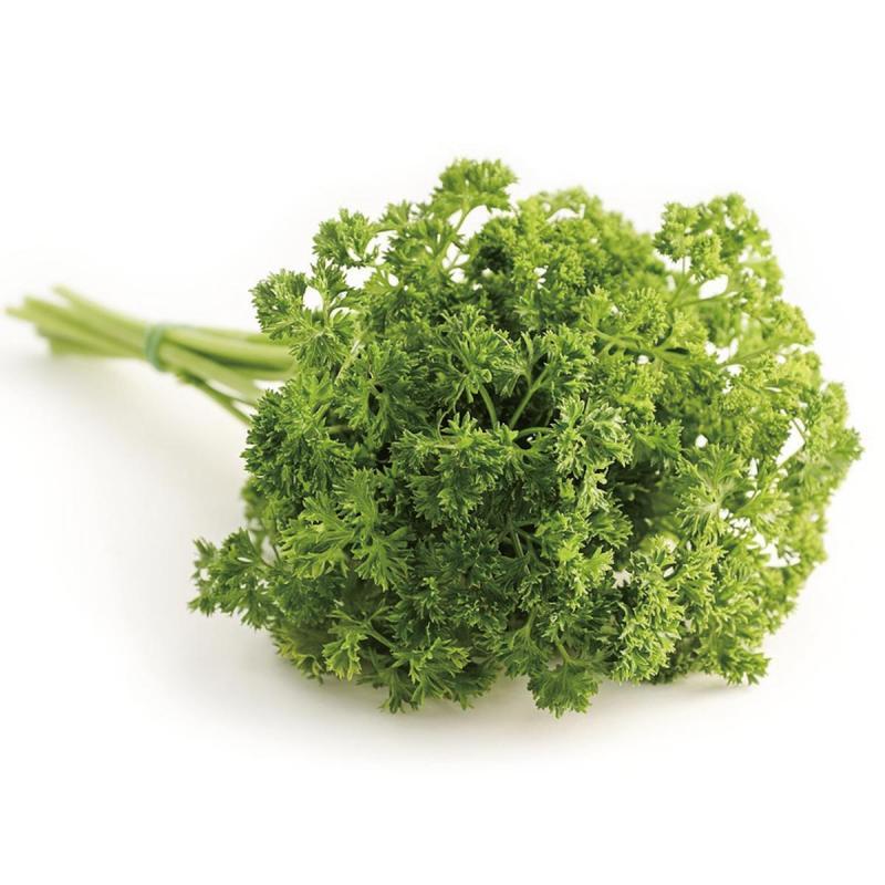 「パセリ」の育て方・栽培のコツ(家庭菜園)