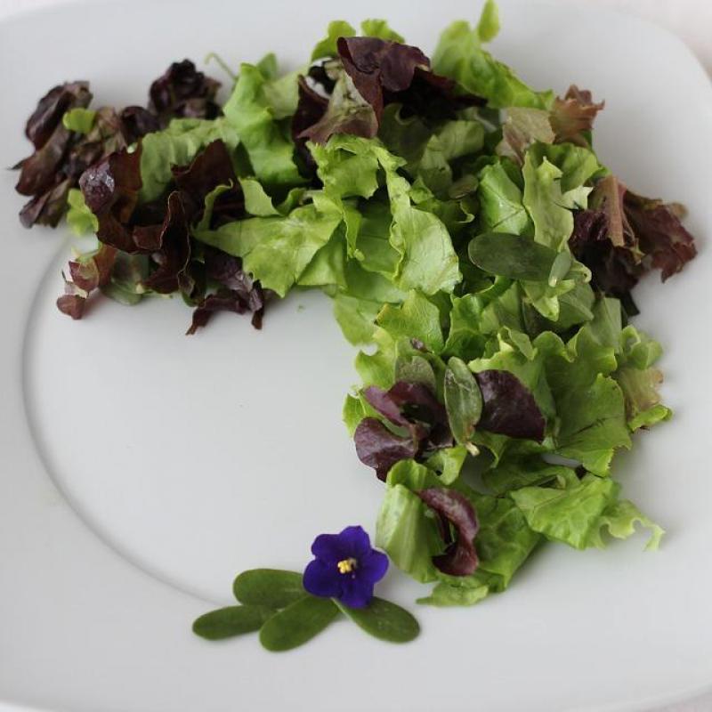 家庭菜園「有機・無農薬栽培」の基礎について