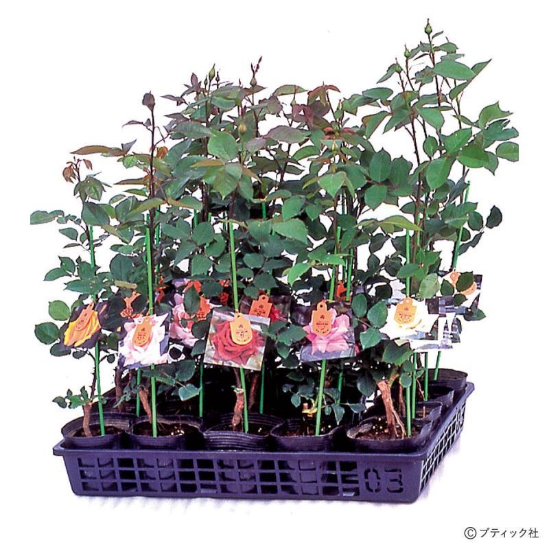 園芸「バラ栽培の基礎」について