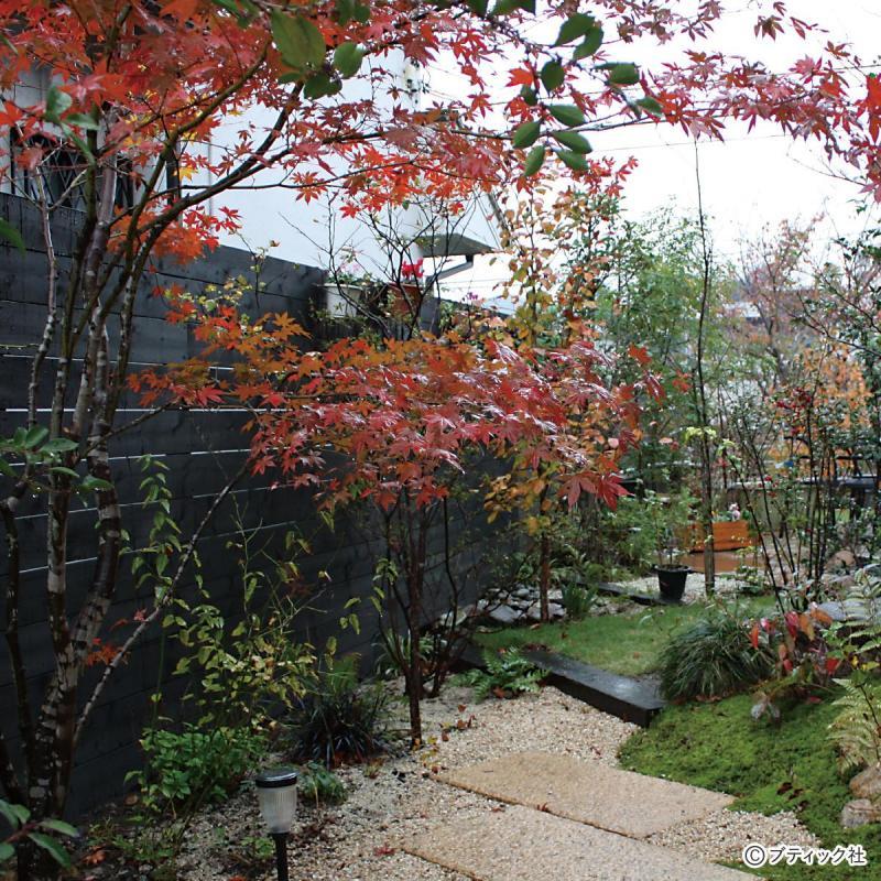 和風の雑木の庭で「秋の紅葉」を楽しむ方法!