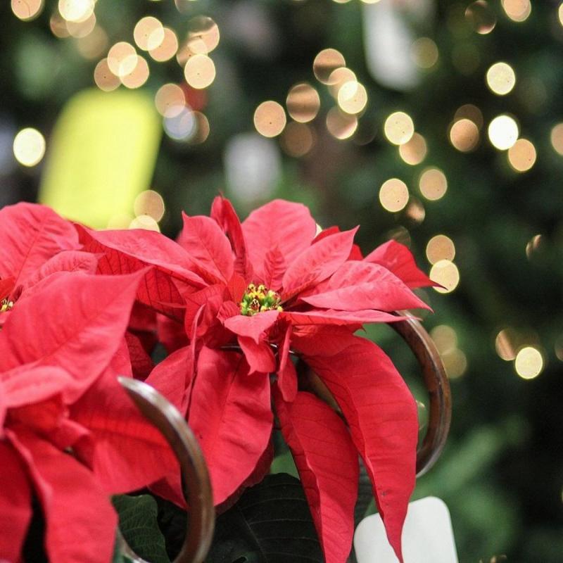 「冬の寄せ植え」レイアウトの仕方10選!クリスマスにもおすすめ♪