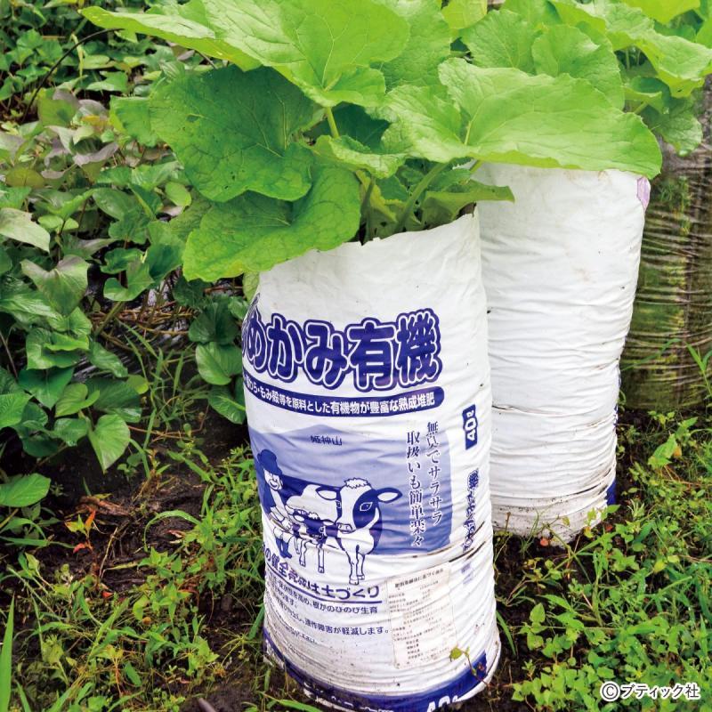 野菜作りのアイデア!「培養土の袋栽培」やり方と実例