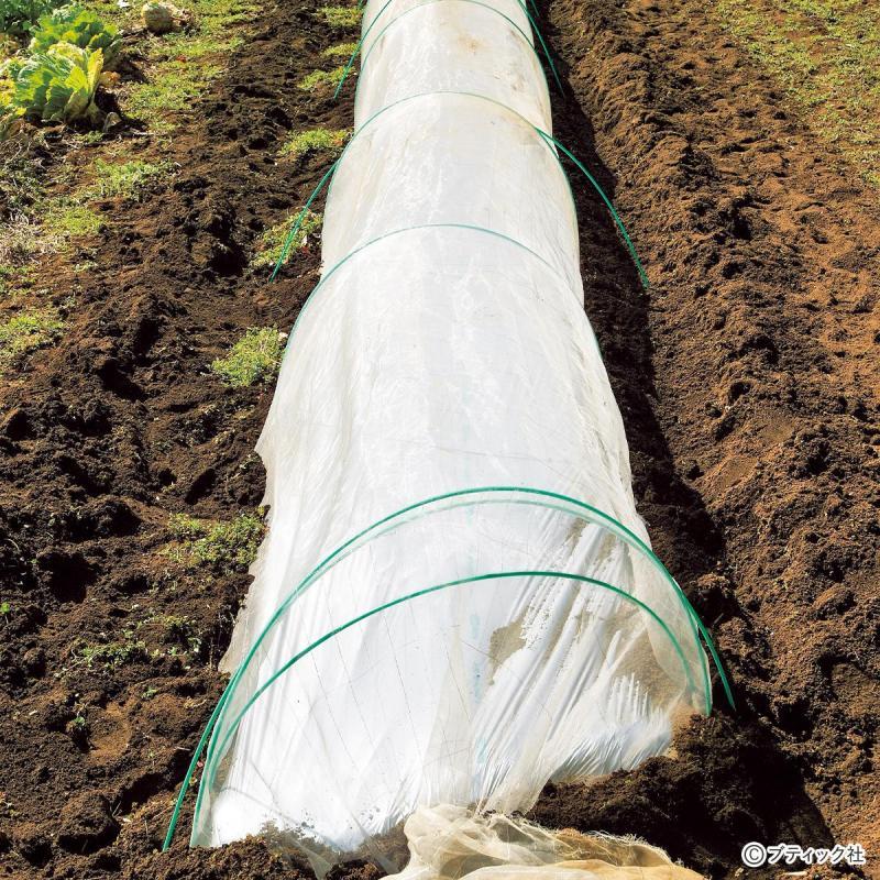 畑の虫対策!「防虫トンネルの効果的な利用方法」について