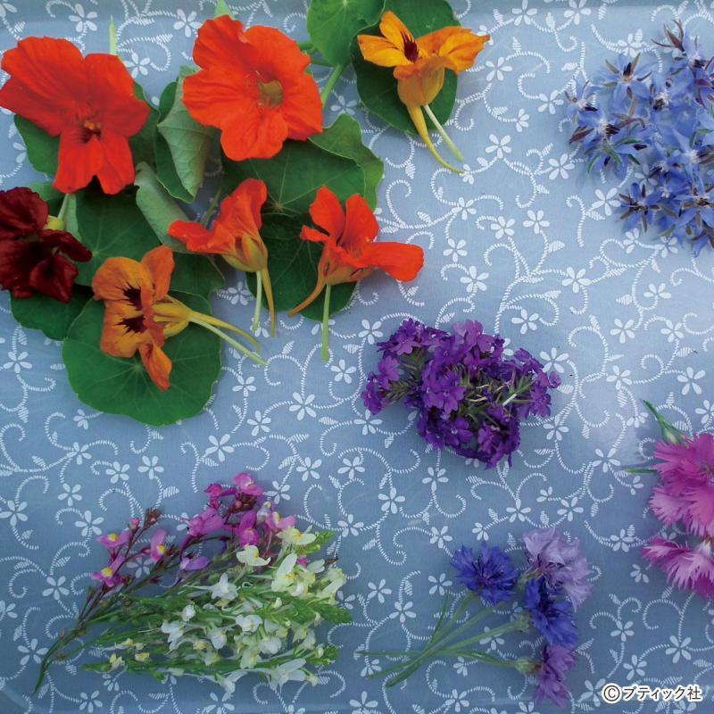 家庭菜園「エディブルフラワー(食べられる花)」の育て方