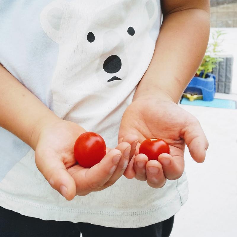 家庭菜園 プランターで育てやすい「野菜」のおすすめ!7選