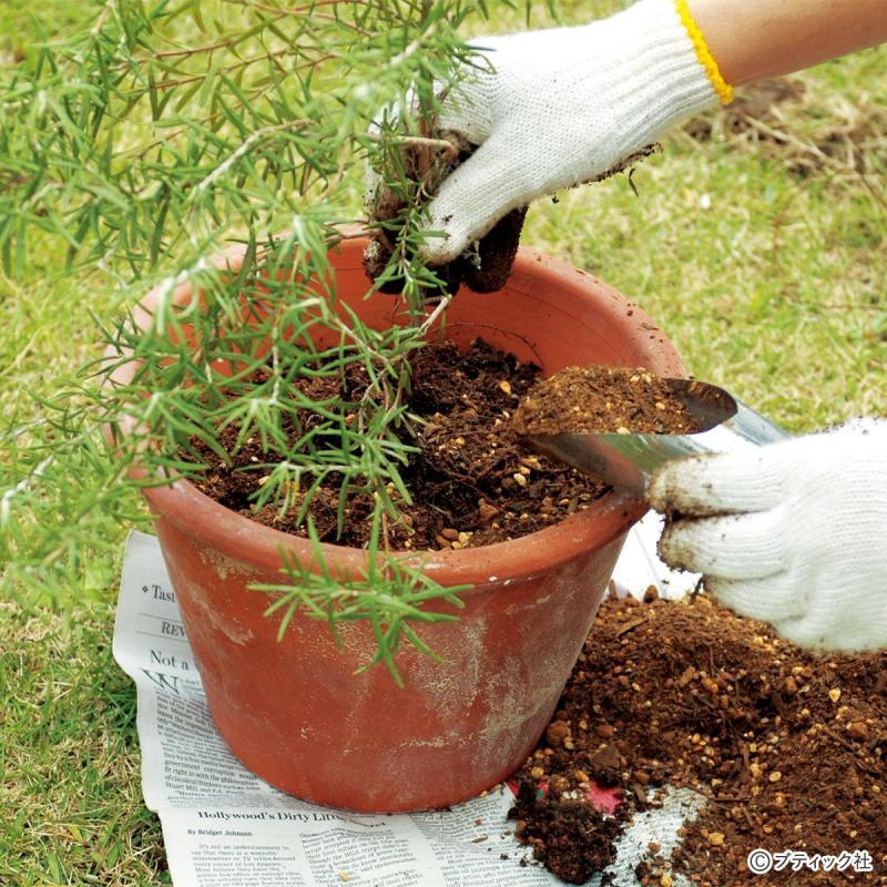 花づくりの基礎│「切り戻し・植え替え・さし芽・さし木」のコツ