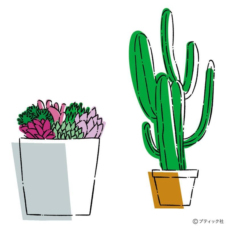 人気の観葉植物│選び方のコツを解説!