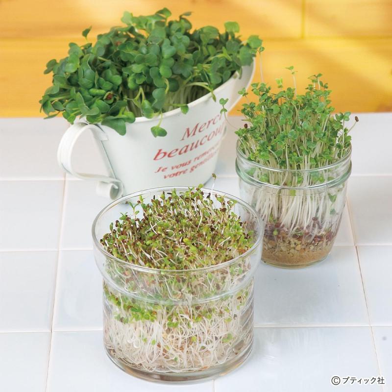 キッチンで育てる「スプラウト栽培」