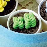 ちょこんと飾ろう!樹脂粘土で作る多肉植物の紀ノ川の作り方(粘土)