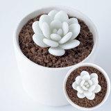 樹脂粘土で手作り!個性的でかわいい多肉植物のラウイの作り方